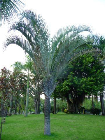 Nanning:ce parc du camélia d'or est une merveille comme tous les parcs de cette villehttp://fdata.over-blog.net/99/00/00/01/img/albums/admin/thumb_pink.jpg