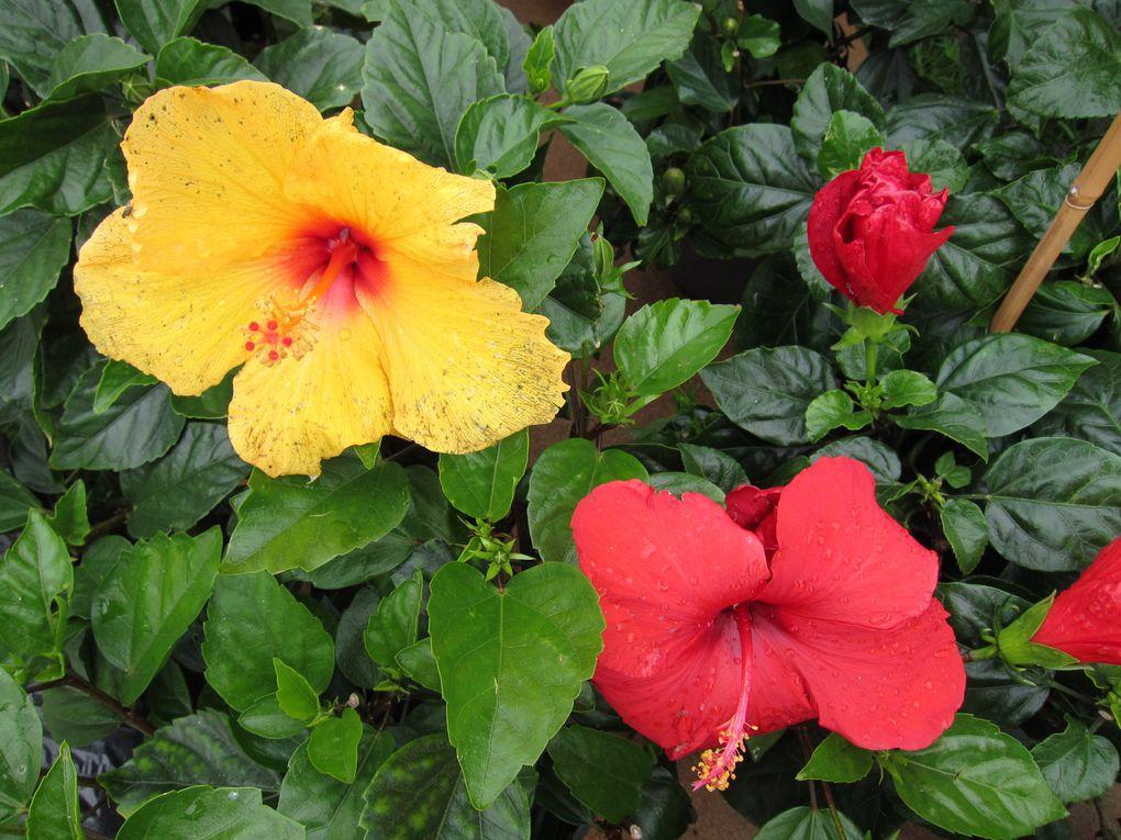 exposition de fleurs vivaces,rosiers et plantes rares par des producteurs, horticulteurs..déco de jardin, aménagement, produits du terroirs