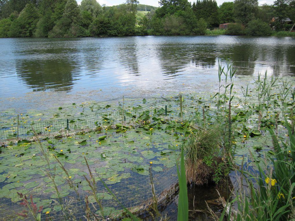 sortie pédestre des vadrouilleux de Eu à Longroy sur le chemin des étangs
