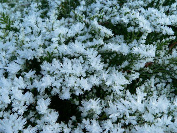 Album - jardin d'hiver
