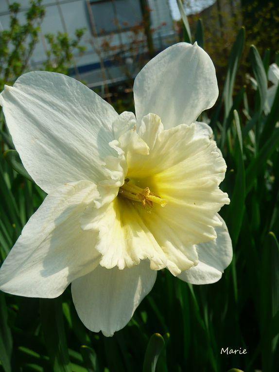 mes fleurs  et mes animaus au jardin