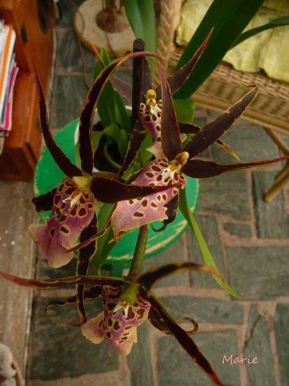 mes orchidées au fil du temps