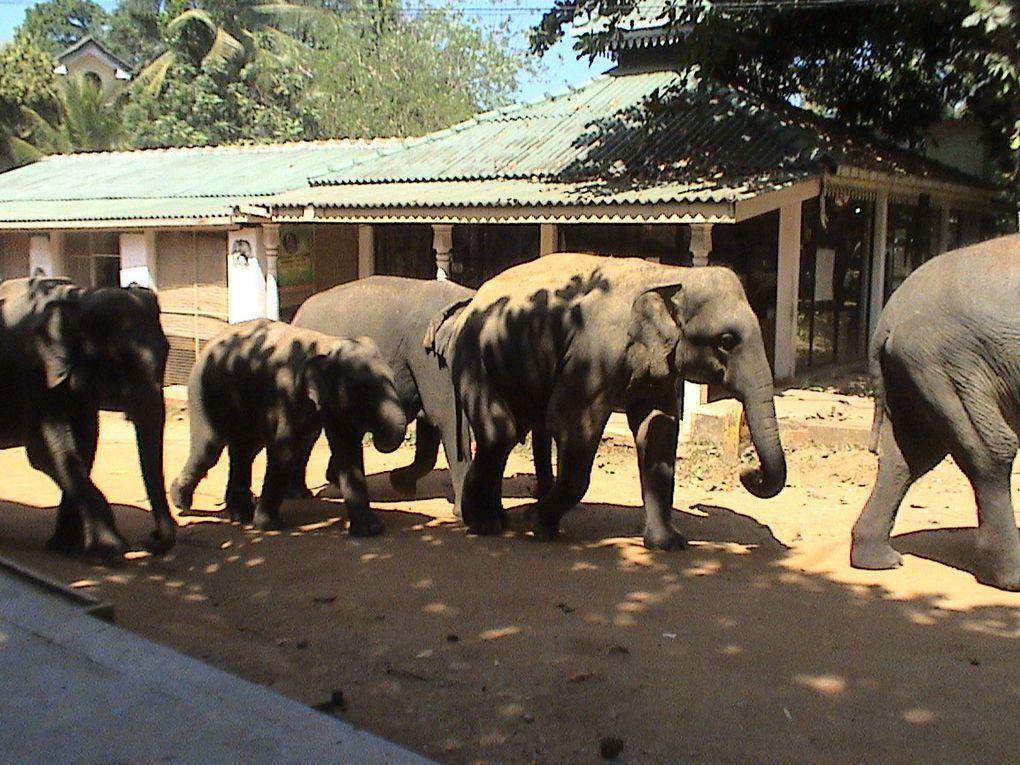 La faune du Sri Lanka