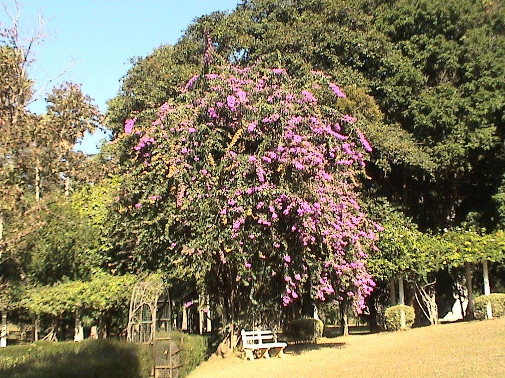 La flore du Sri Lanka