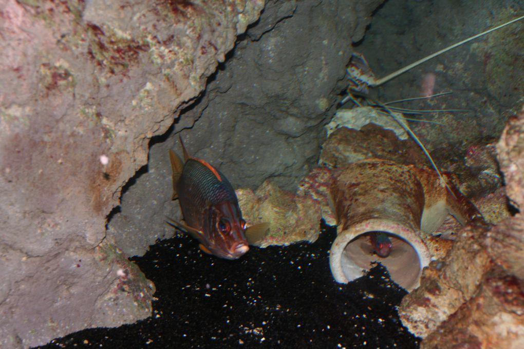 Album - Aquarium
