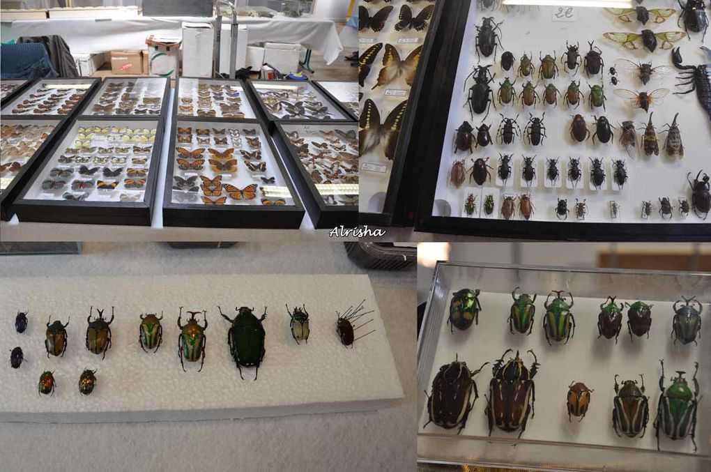 """Les 13 et 14 juin 2009 à Villers-Cotterêts (02), organisé par l'Association photographique """"GRAND ANGLE"""".Reptiles, serpents, lézards, insectes, araignées, papillons et petits rongeurs, ....Exposition, ventes à des particuliers.Pour certai"""