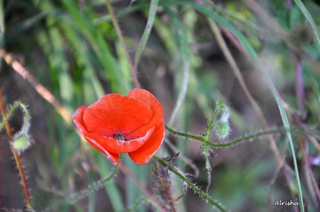 Mettre en valeur toutes ces beautés florales ! Qui s'en plaindra ! Une nature si généreuse !