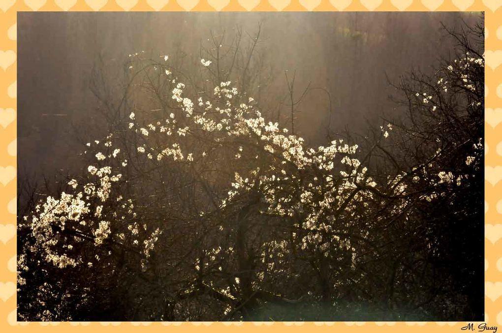 Un autre album parmi les autres fleurs !