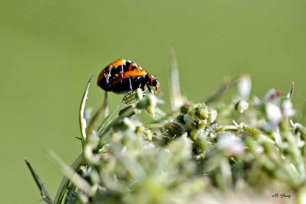 Une de mes passions: la macrophotographie.Ce petit peuple qui se dissimule sous les herbes, les feuilles ou se montre sous les rayons du soleil, c'est la vie. Sachons préserver cette petite faune en laissant des friches où l'action humaine est in