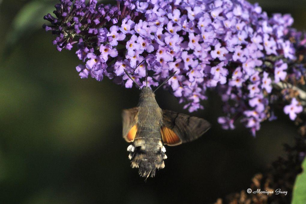 Nos petites bêtes, celles que l'on ne remarque pas dans le creux des herbes, le coeur des fleurs, sur les feuilles des plantes, ...