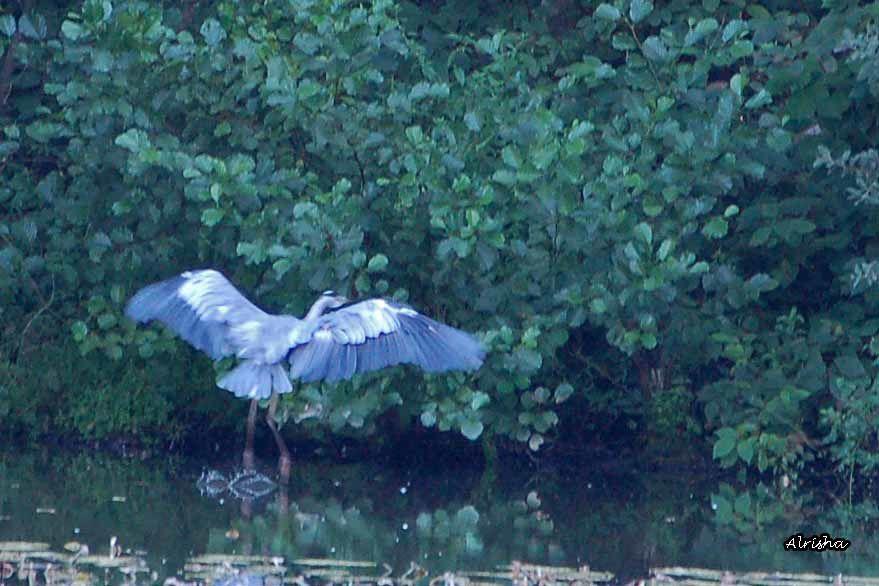 Pas facile de surprendre les oiseaux ! Au téléobjectif, j'ai réussi à en surprendre plus d'un.Mon expo de 2010 du 17 avril au 7 mai sera consacrée aux oiseaux des jardins, des bois et des bords de l'eau.