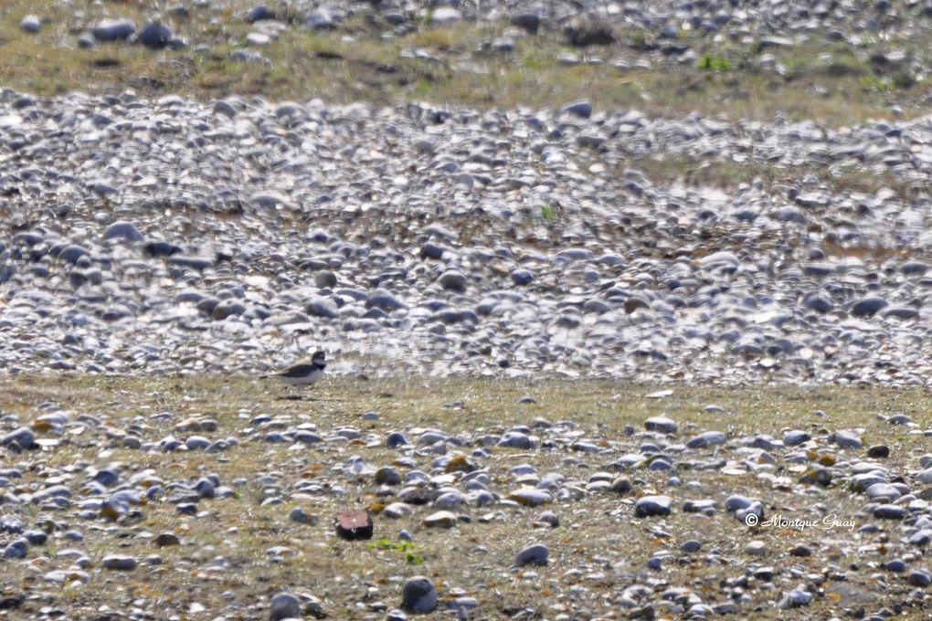Dans le parc ornithologique du Marquenterre, en Baie de Somme. Clichés pris lors de mes visites successives depuis 2010
