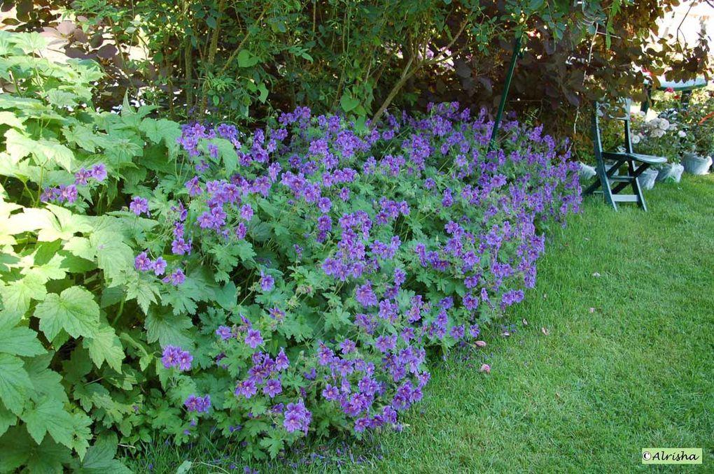 Dans les jardins en 2008puis le dimanche 7 juin 2009 lors des Journées Antiquités et Ornements 10è édition