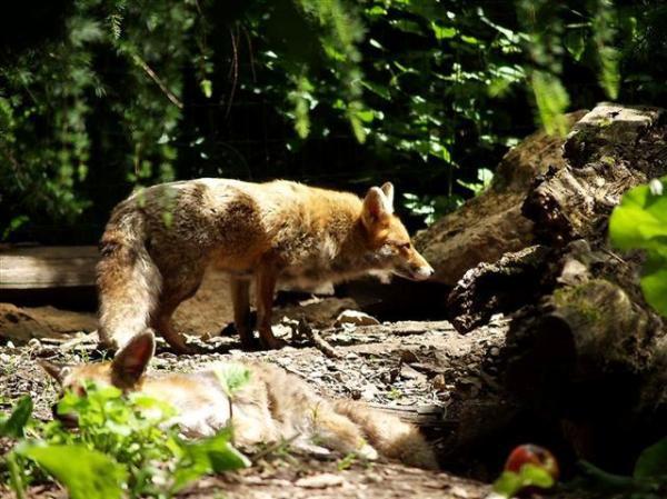 Animaux du parc de Sainte Croix à RHODES