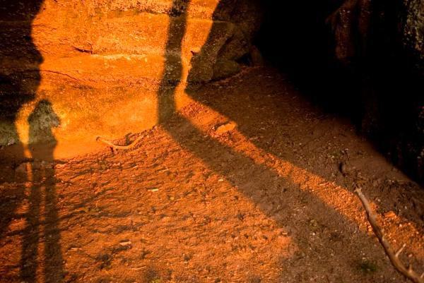 Donon, montée au temple par une belle lumière. Le Sequoia géant de Kappelbronn à Lutzelhouse. Abreschviller, roche du Diable avec belle lumière. Vaches Highland Cattle.  Donon, col de l'Engin, arbre et pleine lune, brume et belle lumière. Site archéologique de la Croix guillaume. Walscheid, cupule au sommet du Hohwalsch.