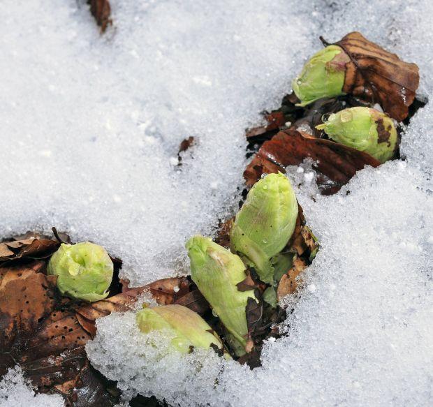 Flore diverse d'Alsace et des Vosges - Identification prochainement