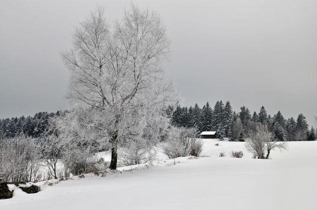 Haut du Tôt, La Bresse. Haut-du-Tôt, chalet refuge. Le Haut-du-Tôt, cascade de la Pissoire en hiver. Massif du Roosberg, orgues basaltiques, hêtres remarquables, ambiance printemps, refuge Sattelboden, Fuchsfelsen, ferme auberge de Michel Bleu, refuges sous le Roosberg, La Bresse dans la lumière du soir, Le Haut-du-Tôt sous la neige et le refuge de la Charme sous la neige. Forêt dans la lumière du soir au Haut-du-Tôt. Michel Laurent, autoportrait.