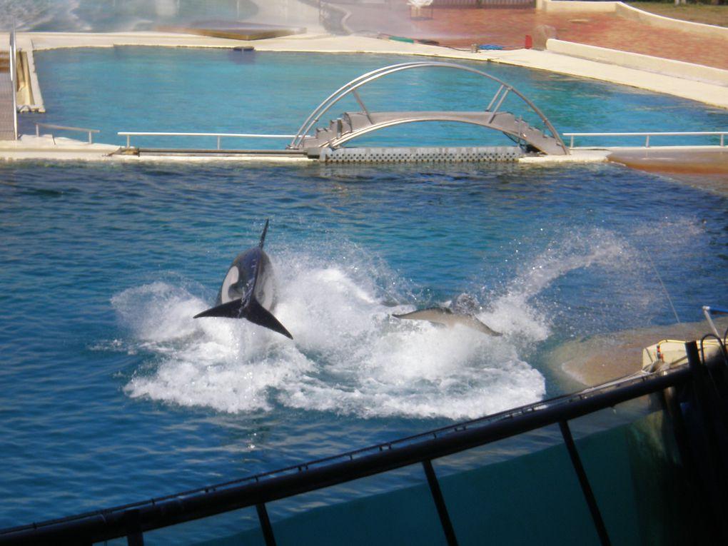 Ma petite escapade au royaume des dauphins et des orques ! !