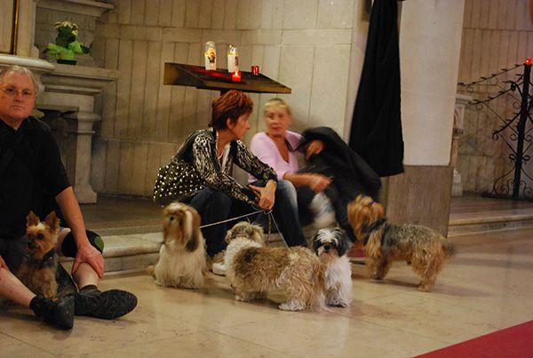 Bénédiction des animaux et kermesse 2012 à St Pierre d'Arène - NICE