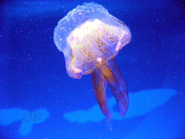 Album - Aquarium-Monaco