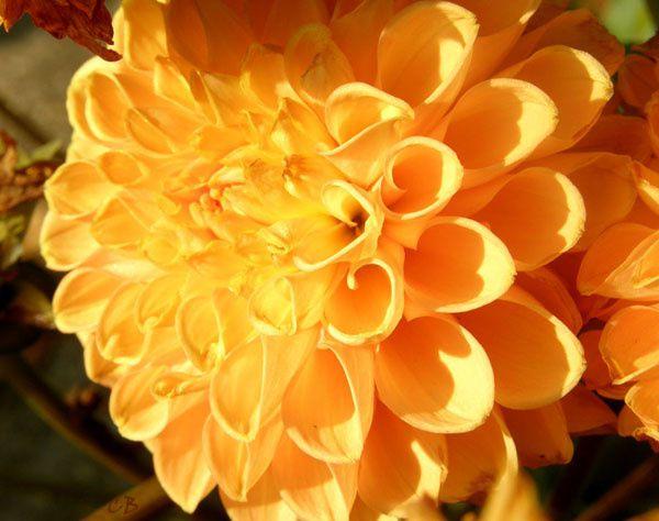 Album - Flore