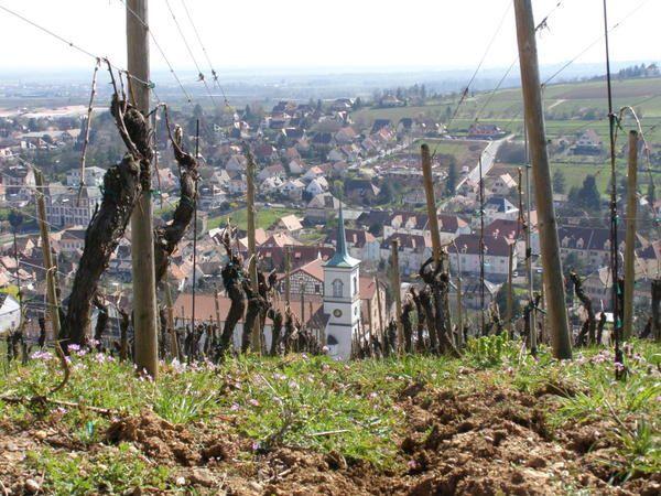 L'Alsace, une mosaïque de sols et des coteaux bien ensoleillés et drainés.