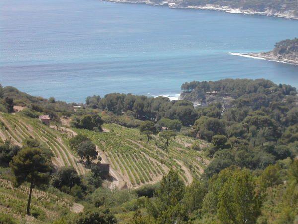 Régions méditerranéennes, entre garrigue et mistral.