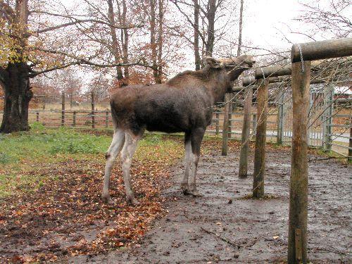 Les photos prises au zoo de Höör.