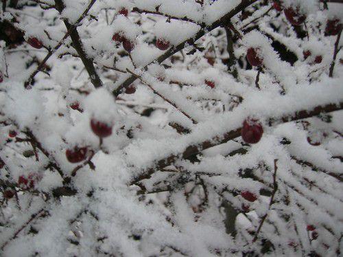 Album - Snow