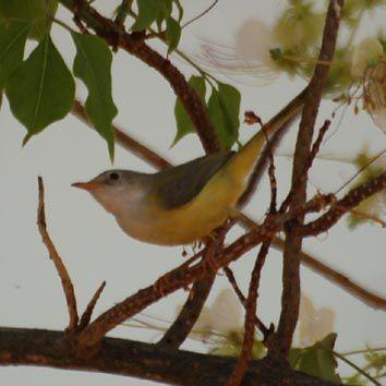 Album - Oiseaux du Boundou