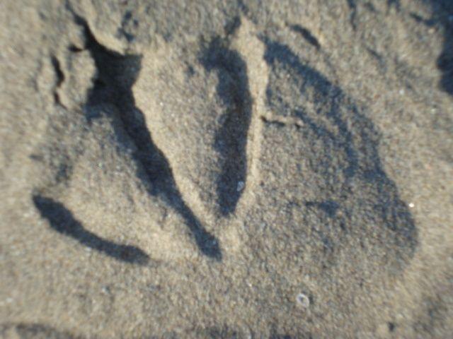 Traces sur le sable, détails divers