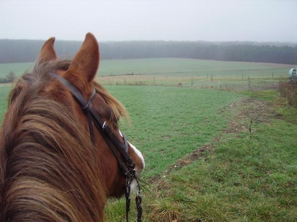 Un cheval au pré, les copains chevaux et poulains, l'alimentation, les balades, la gadoue... la belle vie quoi!