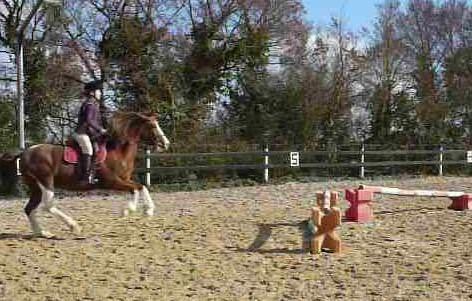 équitation, travail du cheval, dressage, loisir, équitation éthologie, pistes et idées exercices pour travailler seul son cheval, reprises, barres au sol, saut d'obstacle, CSO, balade équestres