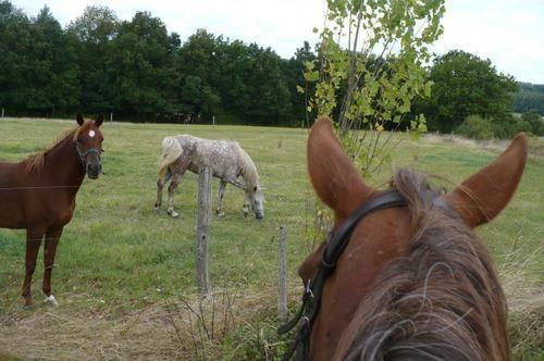 Un cheval, des chevaux, des poulains, une petite chatte...