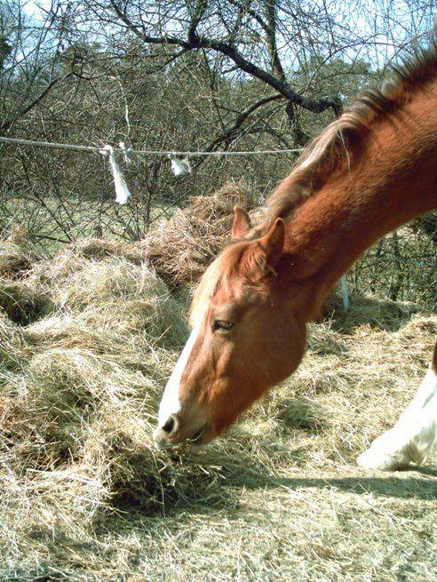 un cheval au pré, en carrière, en promenade, au paddock, avec d'autres chevaux... la vie d'Eros quoi!