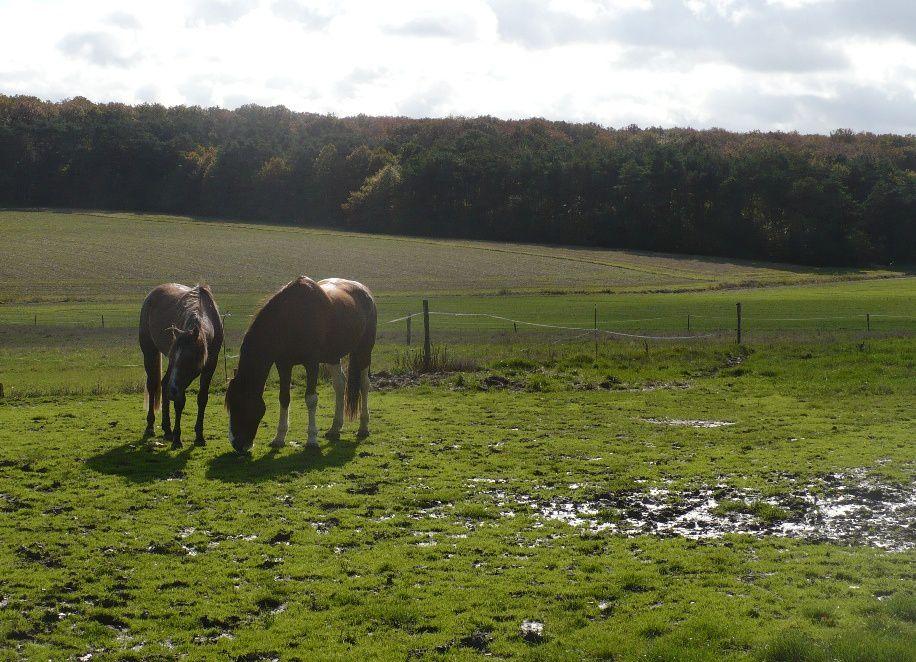 Un cheval, un poulain, le pré, la vie des chevaux des écuries en photo, au fil des saisons, cheval de loisir, de dressage, de cirque, cheval pie alezan quatre balzanes liste...