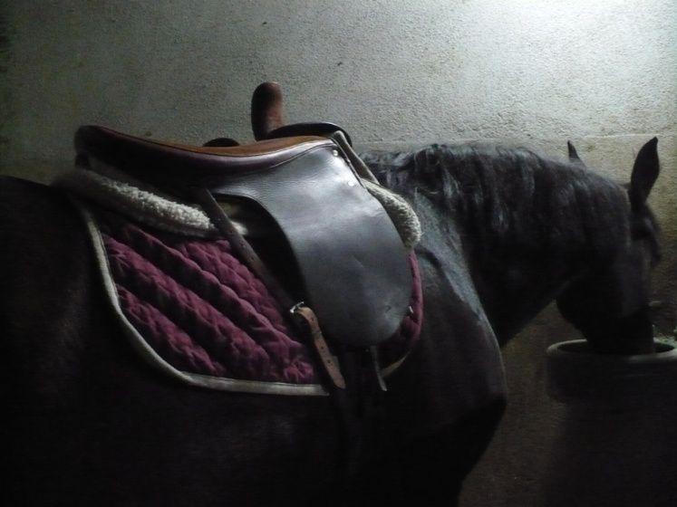Les chevaux des reprises de dressage du mardi soir, les installations du centre équestre, les leçons en amazone...