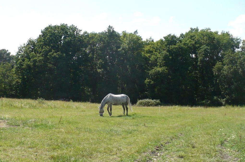 un cheval en pension pour deux mois, quelques séances de dressage en amazone ou à califourchon, un cheval au pré...Kitano, dit Lulu!