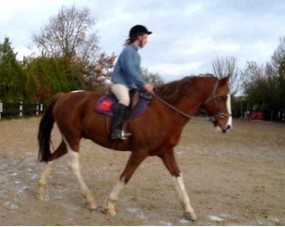 équitation sans mors éthologie séance de travail monte en licol puis en collier ou cordelette autour de l'encolure