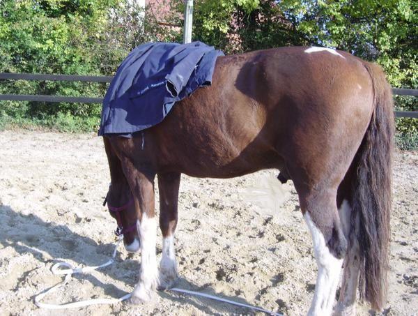 la monte en amazone depuis mes débuts jusqu'en 2007 environ, les premières et reprises, cheval, équitation en amazone, selle d'amazone, costume et tenue d'amazone.. sidesaddle  riding asideMonta a la AmazonaDamensattel reiten