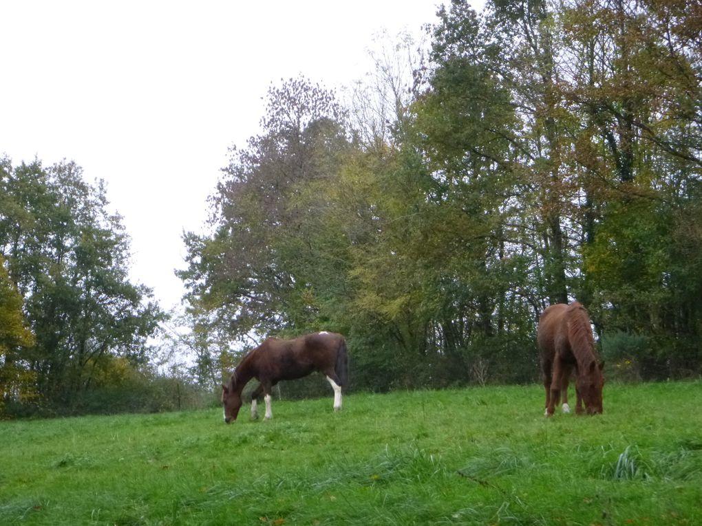 monte en amazone Chantilly écuyère