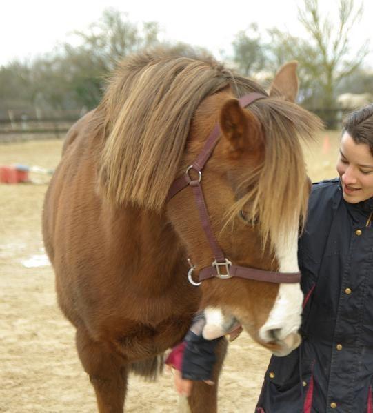 cheval, chat, un cheval et sa copine chatte, un cheval de cirque! éthologie, jeux, cheval au naturel!