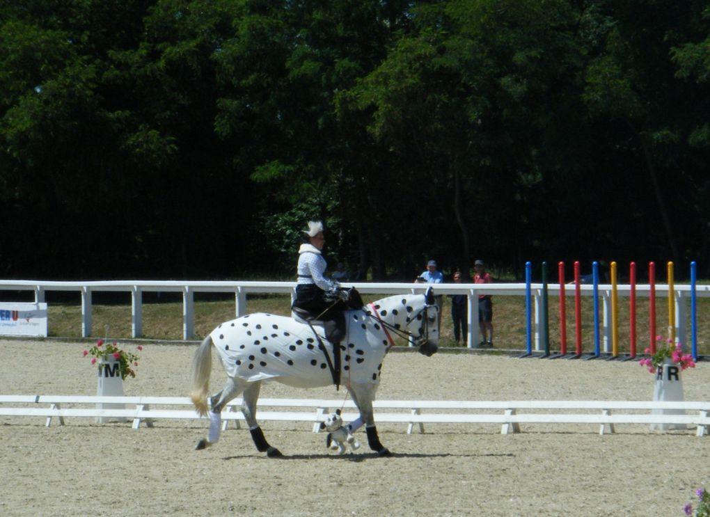 concours équitation en amazone, le Lion d'Angers, mai 2011, dressage, costumes, saut d'obstacle, derbyla monte en amazone sous toutes ses facettes, cheval, équitation en amazone, selle d'amazone, costume et tenue d'amazone, reprises, initiations,