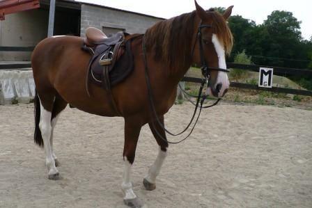 ça m'arrive aussi! Eros version cheval de dressage ou d'extérieur, du travail ou de la détente en carrière, des promenades...