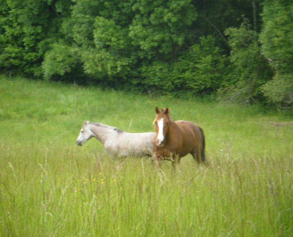 Album - castille chevaux et amazone