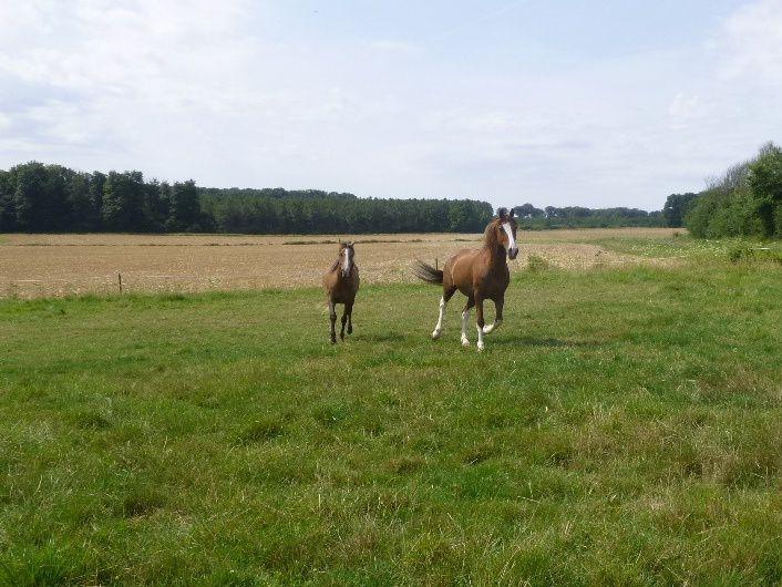 Album - equitation-en-amazone