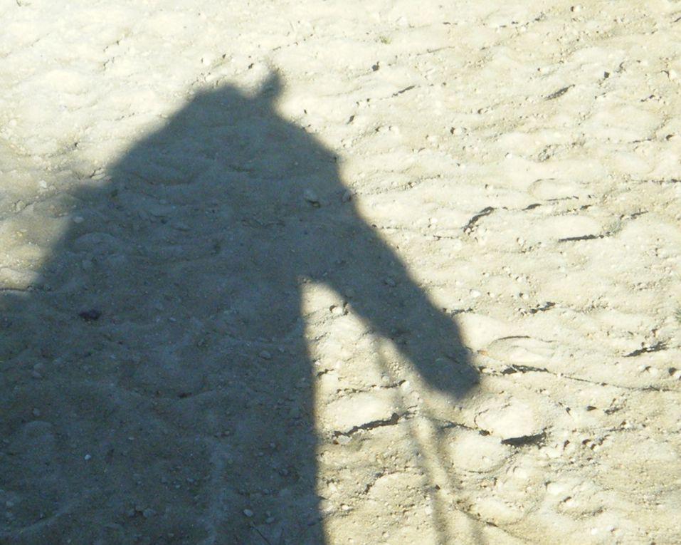 Album - cheval-2012