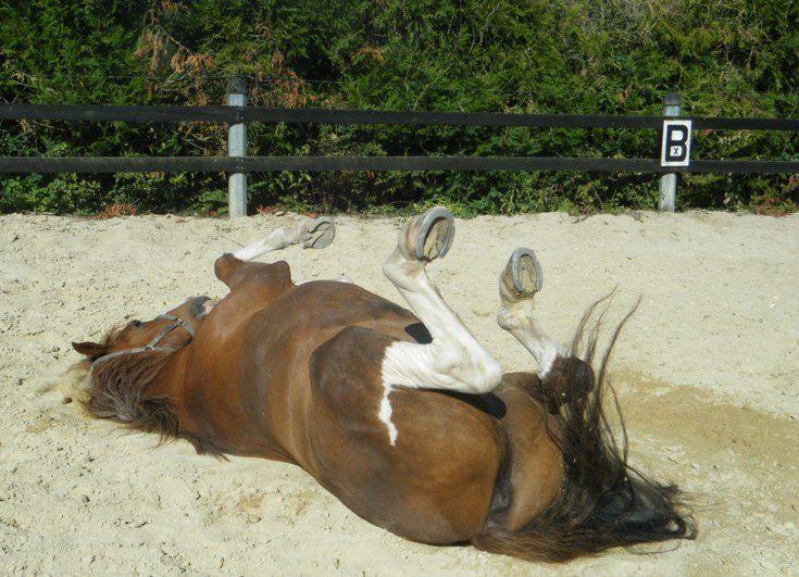 un cheval en son pré.photos de chevaux, poulains, au pré, dans l'herbe, la neige, chevaux et autres animaux, un cheval qui se roule, un cheval qui baille....