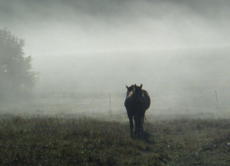 automne 2010 photos cheval au pré, chevaux dans la brume, cheval et chat, cheval au pré à l'automne, poulain, alimentation du cheval....