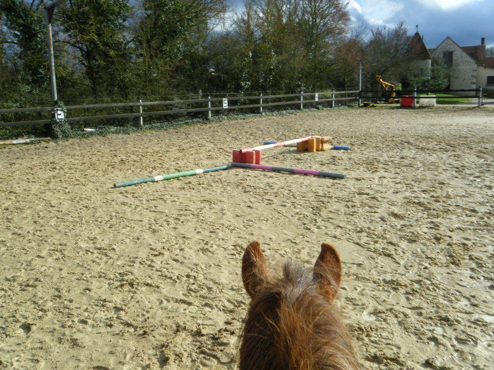 cheval au pré, travail en carrière, chevaux au galop eu pré, cheval au paddock, cheval sellé, poulain